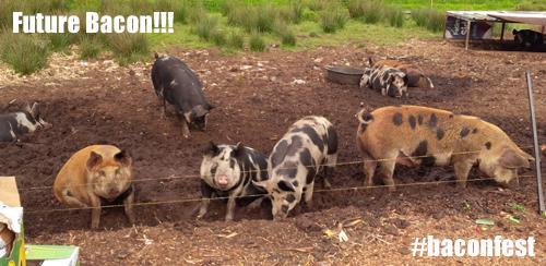 Bacon Fest 1