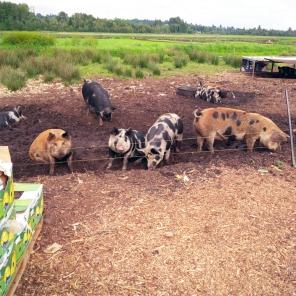 Bacon Fest 12